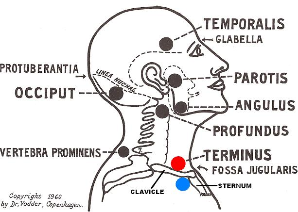 Fig.1. LDM on the neck and face (Vodder, 1960)